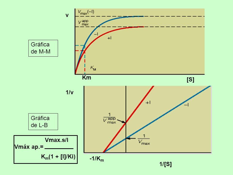 Km [S] v Gráfica de M-M -1/Km 1/[S] 1/v Gráfica de L-B Vmáx ap.= Vmax.s/I Km(1 + [I]/Ki)